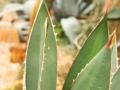 Plant - Cactus
