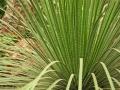 Plant - Grass