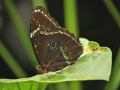 Wildlife - Butterfly