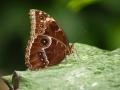 Wildlife - Butterfly2