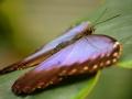 Wildlife - Butterfly3