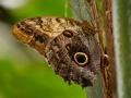 Wildlife - Butterfly4