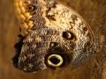 Wildlife - Butterfly5