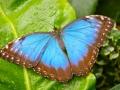 Wildlife - Butterfly6