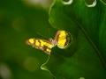 Wildlife - Butterfly7