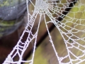 Winter - Web